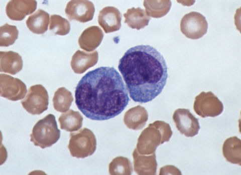Funzioni dei monociti