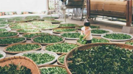 arbusto dalla Cina
