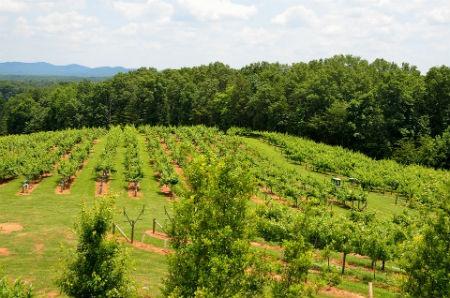 cultura antica del vino