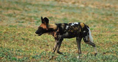 Quali sono gli animali in pericolo di estinzione?