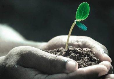 Scopri le migliori colture invernali che puoi coltivare