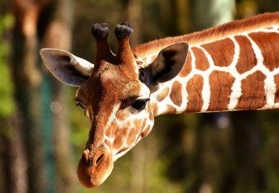 Alcune curiosità sulla flora e la fauna del nostro pianeta