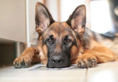 Quali sono i migliori animali domestici da avere a casa?